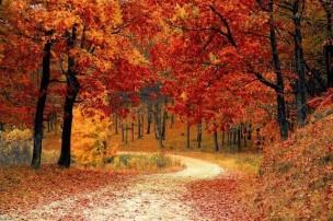 fall-autumn-red-season%20(1)
