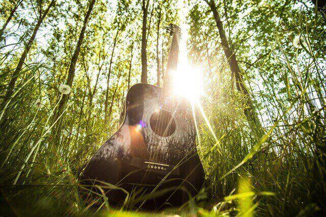 forest-trees-grass-ray-of-sunshine (1)